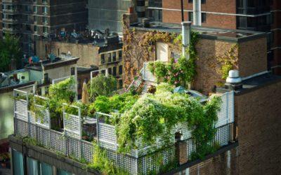 Zelená strecha, po ktorej zatúžite…