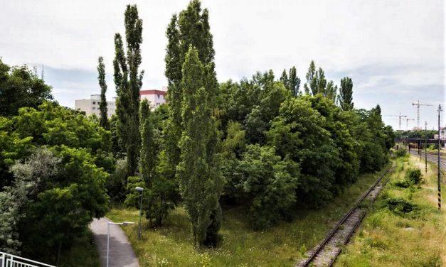 Istrochem sa zbavuje pozemkov, lesík nahradia bytovkou: Obyvatelia Nobelovej prídu o vyše 5000 m2 zelene!