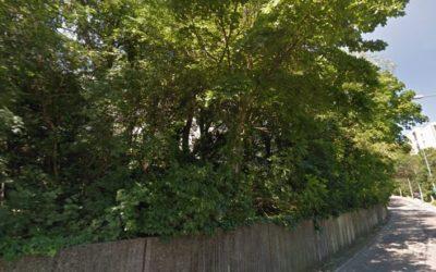 V Starom Meste spílili desiatky stromov. Padli zdravé stromy za obeť developerovi?