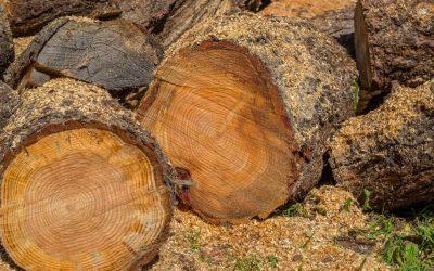Zemaník: Za niektoré sortimenty stavebného dreva sa platí 4-násobne viac ako minulý rok